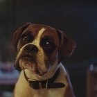Can You Guess the UK's Favourite Ads of 2016?