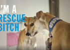 Rescue Pets Are Heroes in New Badass Battersea Ad