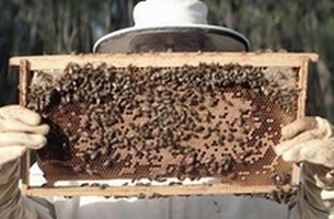 Tiempo BBDO Drums Up Buzz for Bees in New Greenpeace Film