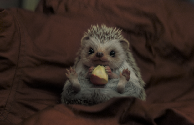 """Making Freddie the Hedgehog: """"A Perfect Storm of Cuteness"""""""