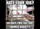 Shocking Emoji-Filled Memes and GIFs Released to 'End the Cage Age' for Rabbits