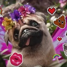 How Three is Harnessing the Power of Memes and Snaps with its 'Puggerfly'