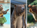 Human Nature: Imagining Musical Marmots, A Bearskin Rug Director and Slam Dunking Squirrels