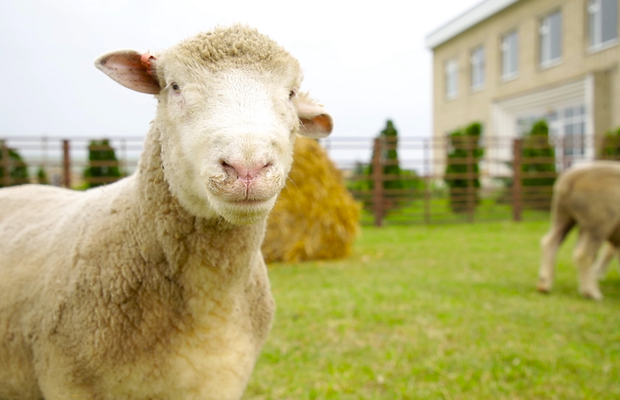 BMB Starts Bleating Knitting for Innocent's Big Knit Campaign