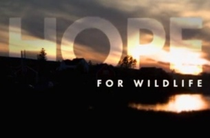 Focus Music Uplifts with New 'Hope for Wildlife' Promo for Viasat Nature