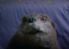 adam&eveDDB Brings a Dash of Romance to Skittles' Super Bowl Ad