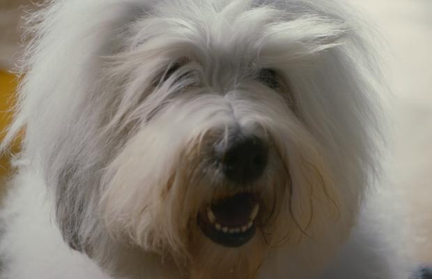 Camila Zapiola Teaches the Dulux Paint Dog New Tricks in Slick Spot