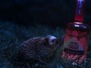 Hedgehog Wanders Through a Field of Gin in Pablo's First Warner Edwards Work