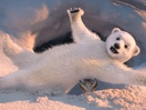 Adorable Polar Bear Cub Learns to Figure Skate in ITV's Dancing on Ice Ad