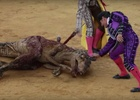This Brutal Film Shows Just How Prehistoric Bullfighting Really Is