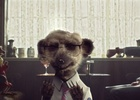 Manners Maketh Meerkat in New Kingsman comparethemarket.com Ad