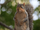 Safety Messages Come Straight from the Squirrel's Mouth in New Campaign