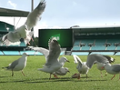 TAB and M&C Saatchi Sydney Ask Aussies to Help Find a Way to Play in Latest Campaign