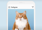 These Instagram Cats Raise Awareness on Online Child Sexual Abuse