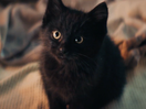 Misunderstood Kitten Brings Unexpected Luck in Moving Dutch State Lottery Spot