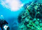 Rapid VR Dives In With Qantas & Hamilton Island