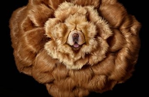 Clemenger BBDO Melbourne and Pedigree Say DentaFlex Helps Your Dog's Mouth Come Up Roses