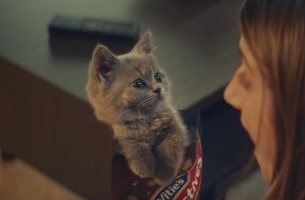 McVitie's Adorably Sweeet Kitties Return in Latest Ad
