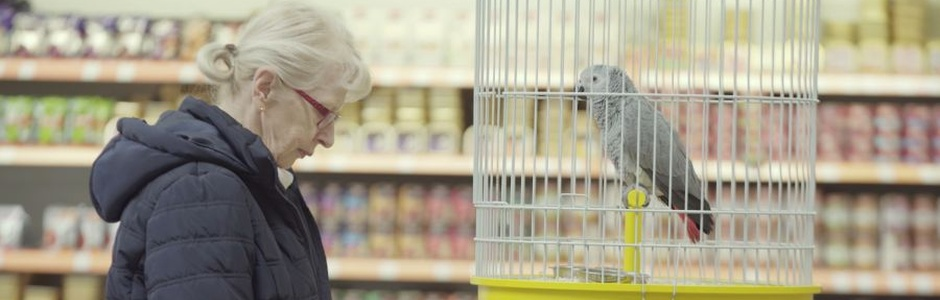 Y&R Prague Employs an African Grey Parrot as a Pet Insurance Salesman