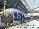 Eurostar Appoints ENGINE to Develop New Communications Platform