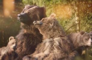 Your Shot: Center Parcs' Un-Bear-ably Cute Family of Grizzlies