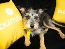 Bumble and Sydney Dogs and Cats Home Unite to Create 'Doggy Dates' via J. Walter Thompson