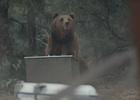 Can a Kodiak Bear Best an Otterbox Cooler? CP+B Boulder Finds Out
