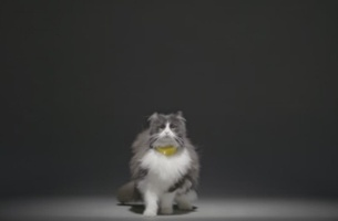Now You Can Chat to Your Cat with adam&eveDDB & Temptations' 'Catterbox'