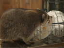 COFFEE MATE Takes on Mornings with Head-in-Hands Initiative from McCann Canada