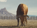 The&Partnership London and Kraft-Heinz Launch Epic New BBQ Sauce 'Bull's-Eye' for UK Market
