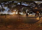 Take a VR Tour of Africa in FCB's New Campaign for Amarula Liqueur