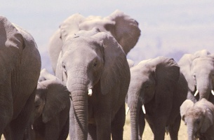 Amarula Helps Protect Africa's Elephants with Immersive Online Experience