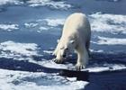 Believe Sync's Brolin Soundtrack WWF's 'Animal Parade' PSA to Help Save The World