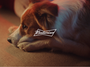 Budweiser Responds to Requests and Returns Thrones to Pets at NBA Finals
