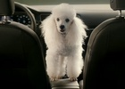 New Features on The VW Golf Cause Amusing Problems in Global DDB Berlin Campaign