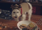 Matt Carter Directs Matalan Christmas Shaggy Dog Story
