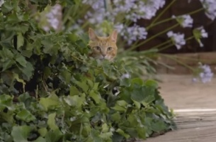 Tabby Cat Wets its Whiskers for Adventure in New Toyota SA Spot