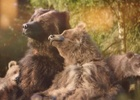 Your Shot: Center Parcs' Un-Bear-ably Cute Family of Grizzlies