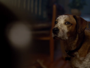 A Dog Finds Joy in Microsoft-Packed Dream in the Brand's Joyous Christmas Ad