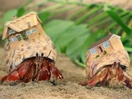 Swapping Shells: Zoopla Launches New Crabworld Campaign