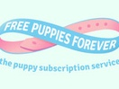 McCann Melbourne Scores Special Awards at Global WARC Awards for 'Free Puppies Forever'