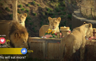 NatGeo - #SavageThanksgiving Live Stream