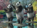 Sudocrem Celebrates Its 'Soothing' Heritage with Some Tai Chi Pandas