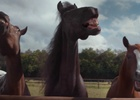 Your Shot: Volkswagen's Laughing Horses