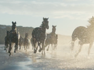 New British Lloyds Bank Film Stars Their Iconic Horses on Kiwi Shores
