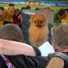 TikTok Captures the Skills, Thrills, Joy and Pain of UEFA EURO 2020 in Rebooted Spot