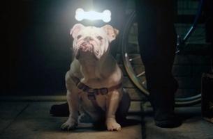 Generator's Igor Borghi Keeps on Shining with Beghelli Sorpresa Light Bulbs