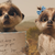 Oleg's Back for comparethemarket's Family-Filled Summer Rewards Campaign