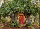 A Bearbnb Fit for Disney's Winnie the Pooh in the Original Hundred Acre Wood Lists on Airbnb