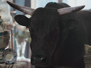 MoneySuperMarket's Calming Bull Keeps the Stress Out of Bills